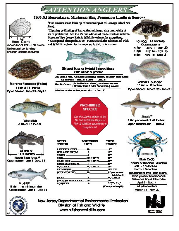 Nj salt fish nj fishing regulations 2017 for Bass fishing season