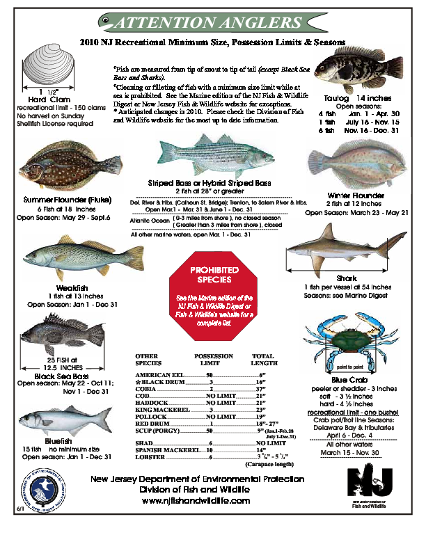 saltwater fish nj nj marine species identification 2017